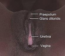Vaginas von The Top