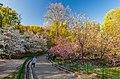 WLE - 2018 - Цвітіння магнолій у ботанічному саду ім. академіка О.В. Фоміна - 1.jpg