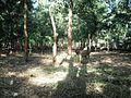 Walayar Deer Park - panoramio (5).jpg