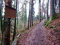 Waldlehrpfad Sulz am Neckar, Hohenzollernweg, Neckarweg, Rotfäule, Wichtigste holzerstörende Pilzkrankheit, die hauptsächlich an der Fichte auftritt - panoramio.jpg