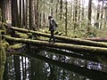 Walking - Olympic National Forest - October 2017.jpg