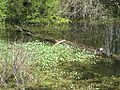 Wapanocca National Wildlife Refuge Crittenden County AR 021.jpg