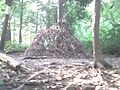 Weird tent out of sticks - panoramio.jpg