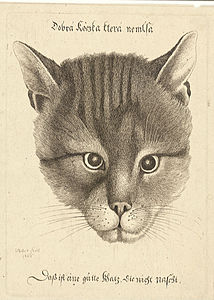 Wenceslas Hollar - Head of a cat (middle size).jpg