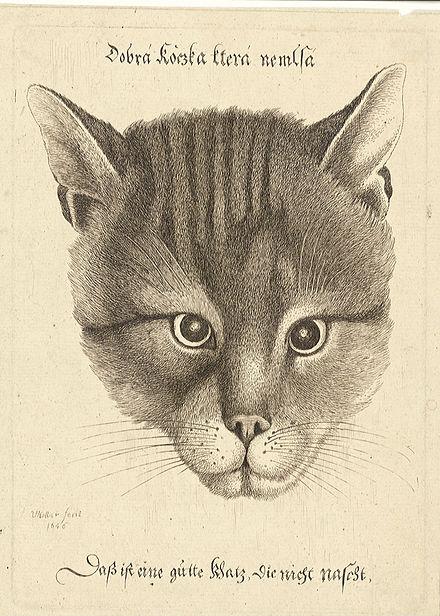 Kočičí malíři