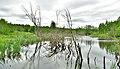 Wetland area of the Valdai National Park.jpg