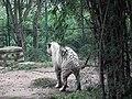 White Tiger from Bannerghatta National Park 8506.JPG