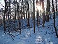 Wielkopolski Park Narodowy zimą 2.jpg