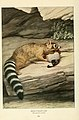 Wild animals of North America, intimate studies of big and little creatures of the mammal kingdom (Page 562) (6217230506).jpg