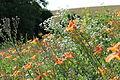 Wildflowers in foreground.JPG
