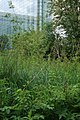 Wildlife-Garden1.jpg