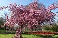 Wilhelminapark, Breda P1360749.jpg