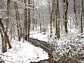 Winter-Snow-Stream-Forest - West Virginia - ForestWander.jpg