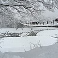 Winter @Shirakawa-gō ,So Beautiful, Village of Shirakawa,Gifu Prefecture,Japan - panoramio.jpg