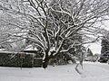 Winter storm, January 2017, southeast Portland, Oregon - 02.jpg