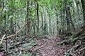 Woko rainforest.jpg