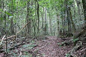 Woko National Park - Image: Woko rainforest