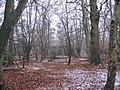 Woodland near Wake Road - geograph.org.uk - 102456.jpg