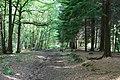 Woodland track - geograph.org.uk - 1361952.jpg