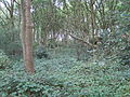 Woodridge Nature Reserve.JPG