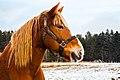 Work Horse (31169520810).jpg