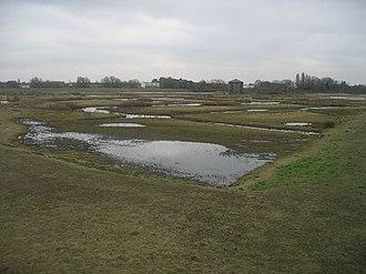 WWT London Wetland Centre - Image: Wwt london.600px