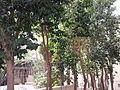 YAD BEN ZVI VIEW 75 20120911 131751.jpg
