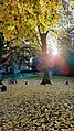 Yellow leaves carpet.jpg