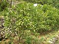 Yiling-District-Grapefruits-4879.jpg
