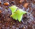 Young cactuses-2.jpg