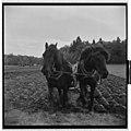 Yrkestevlinger, jordbruk - Fo30141603030055 1.jpg