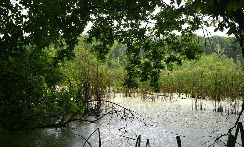 File:Znamianka District Black Forest Bog 01 (YDS 2107).jpg