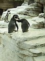 Zoo am Meer 2008 PD 38.JPG