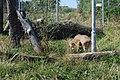 Zoologická zahrada Tábor - Větrovy (18).jpg