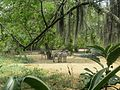 Zoologico de Cali (14985254118).jpg