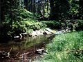 Zrodło rzeki Bialej Ladeckiej.jpg