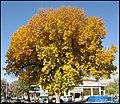 (((پاییز در میدان شهرداری ))) - panoramio.jpg