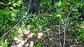 Белый звездочки. Чистопольский р-н. РТ. Май 2014 - panoramio.jpg