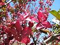 Весна в парку Аскольдова могила IMG 6537.jpg