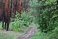 Вячеслав Непран, Новопсковський лісовий заказник, 44-233-5008, 49°30'18.7N 39°02'26.9E.jpg
