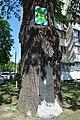 Віковий дуб Крістера DSC 0968.jpg