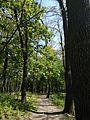 Голосіївський парк 2.jpg