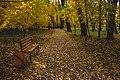 Жовте листя в парку.jpg