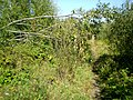 Закінуты, зарослы абыход брэсцкага вузла - panoramio.jpg