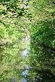 Зеркало Трикратского леса.jpg