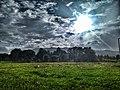 Ліс і поле у Сливках після дощу.jpg
