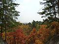 Осенний лес на Мухинке, 2011 г.jpg