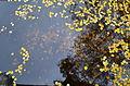 Осень и озеро.JPG