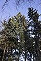 Сирецький дендрологічний парк 21.jpg