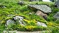 """Стара Планина-околностите на хижа""""Рай"""" - panoramio (6).jpg"""